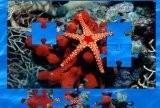 Пазл морская звезда